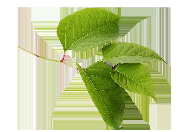 weed eradication