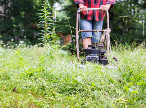 weed removal services for property factors