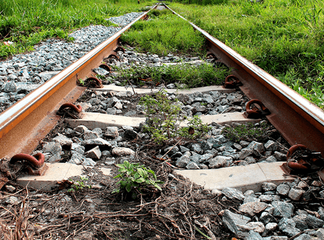 invasive weed removal services for rail services